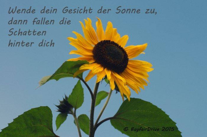 postcard 11_Sonne Kopie